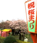 Sakura2008a